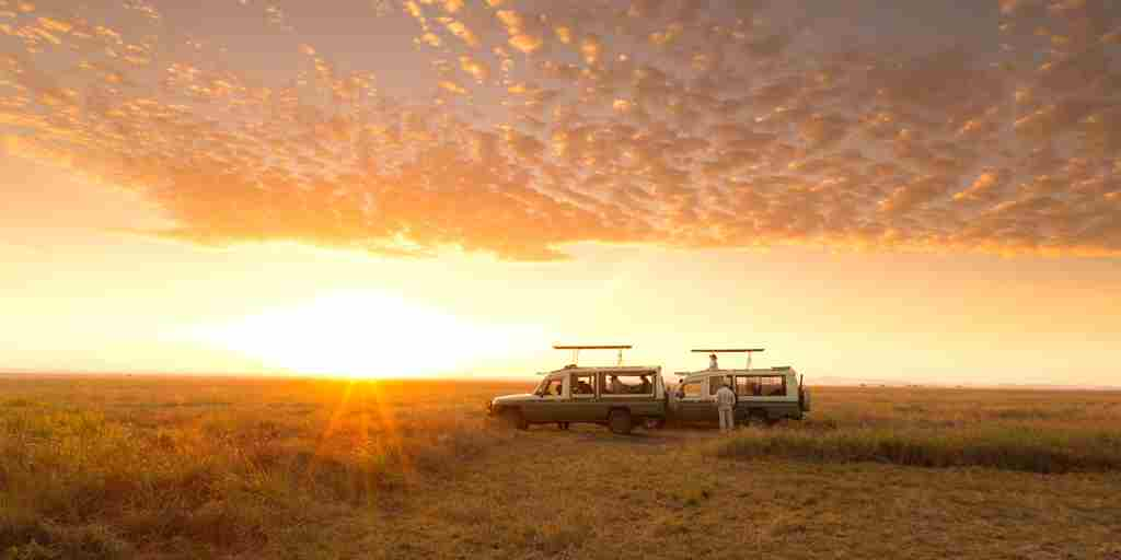 Tanzania-Game-Drive-Sunrise-yellow-zebra-safaris.jpg