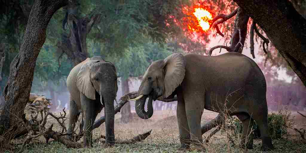 Elephants-sunset-background-zimbabwe.jpg