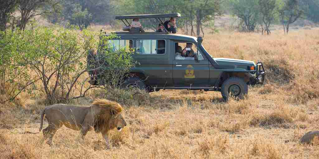 Kirawira-Camp-serena-Game-Drive-lion.jpg