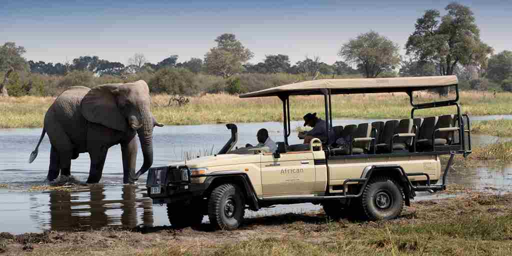 Botswana-game-drive-elephants.jpg