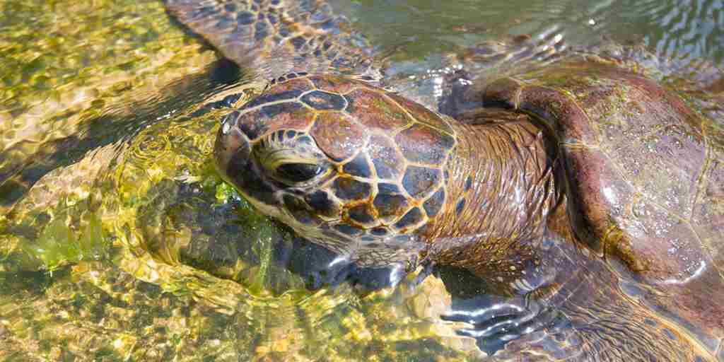 asilia-Turtle-Matemwe-Excursion-marine-turtles.jpg