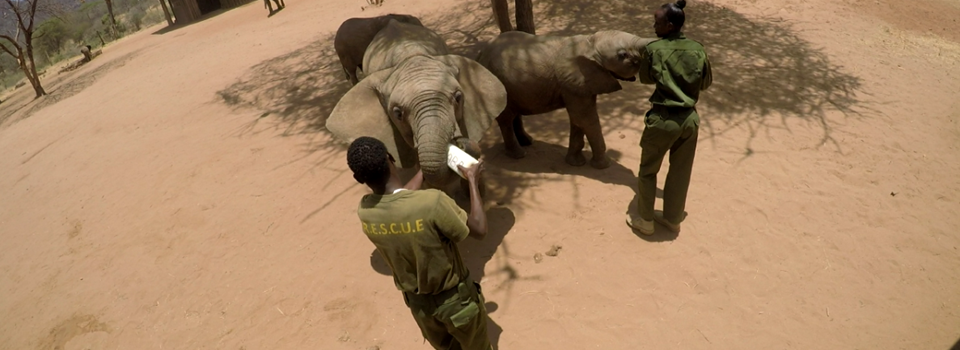 Reteti-elephant-sanctuary-feeding-time-kenya-yellow-zebra-safaris.png