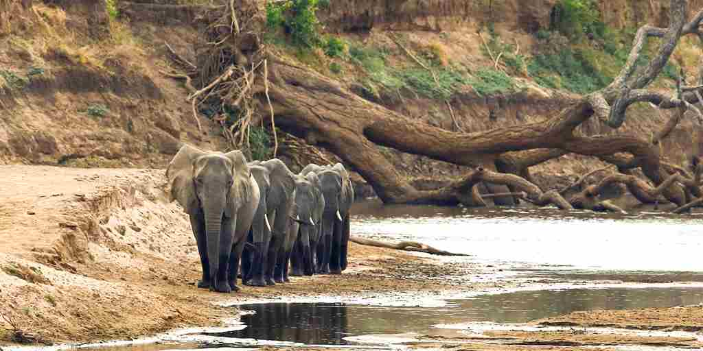 Surefoot Safaris - Elephants At Mapazi.jpg