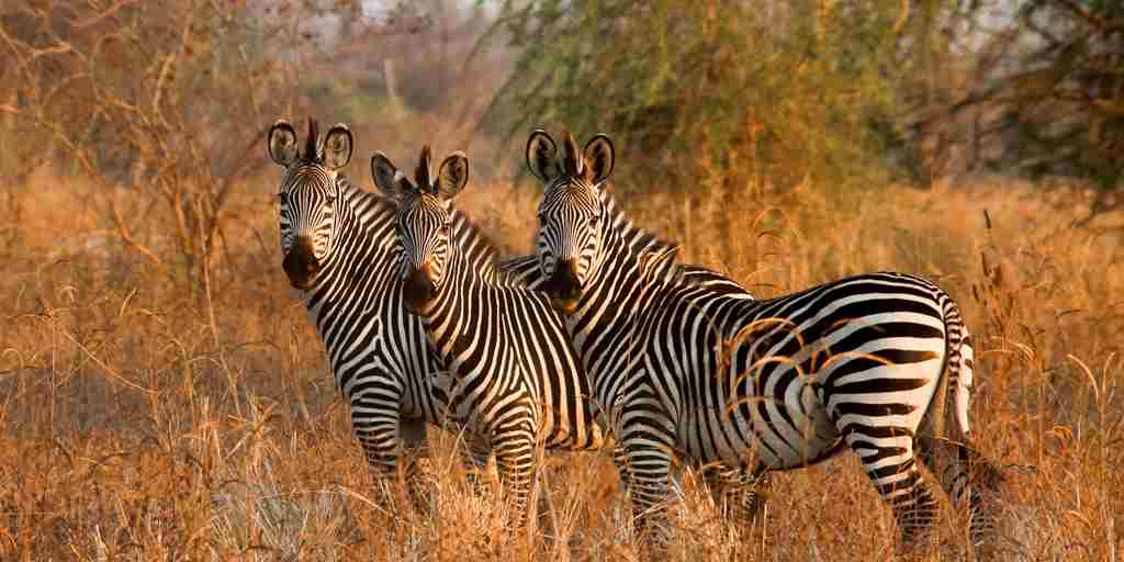 Surefoot Safaris - Zebra on Plains.jpg