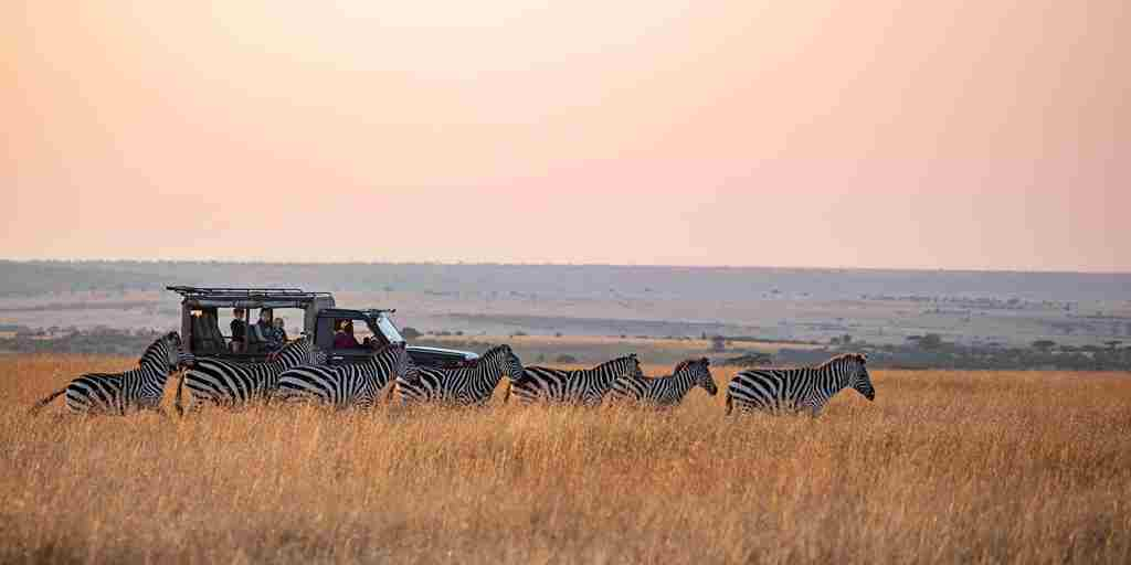 Kenya-Game-Drive-zebra-yellow-zebra-safaris.jpg