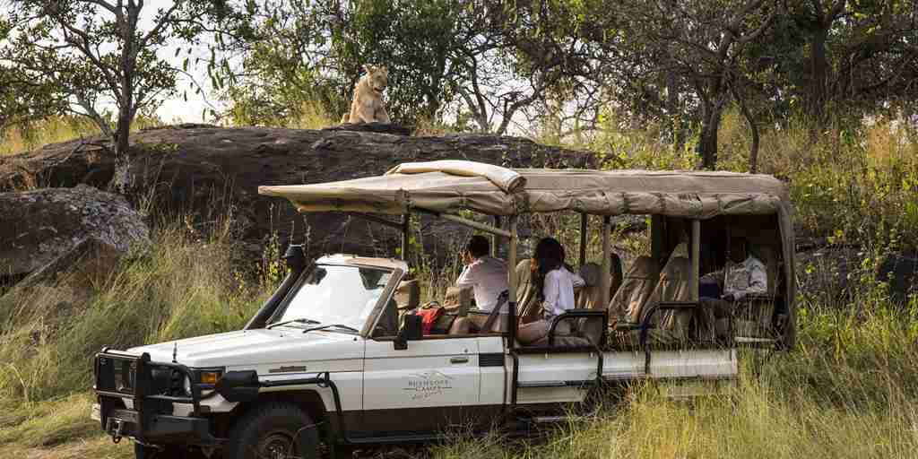 serengeti-bushtops-game-drive-safar-tanzania-yellow-zebra-safaris.jpg