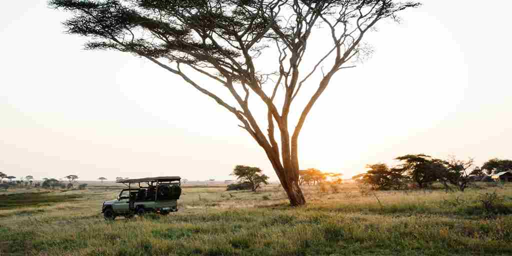 morning-game-drive-namiri-plains-serengeti-tanzania-yellow-zebra-safaris.jpg