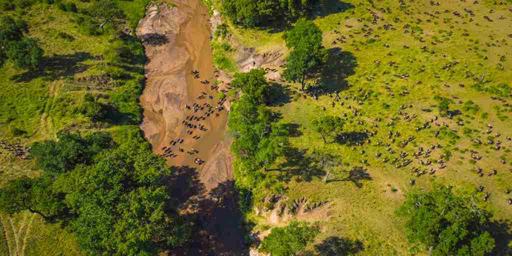 ariel view of the great migration kenya