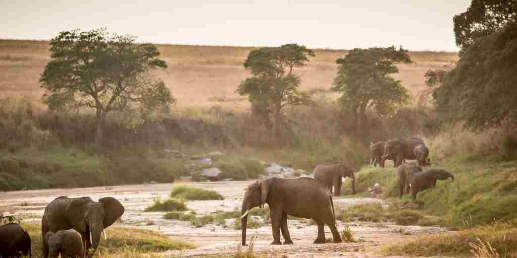 Elephants-on-the-Sand river-Kenya.jpg