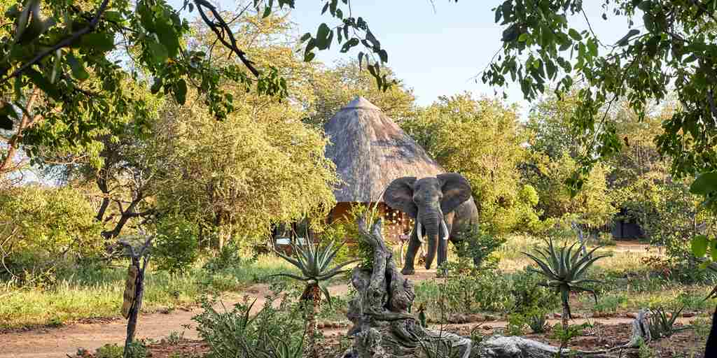Motswari Private Game Reserve Elephant