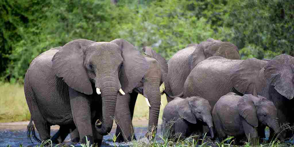 Pelo-Camp-elephants.jpg