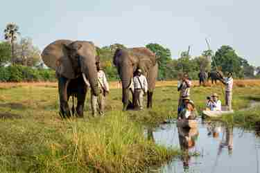 abu-camp-botswana-elephants.jpg