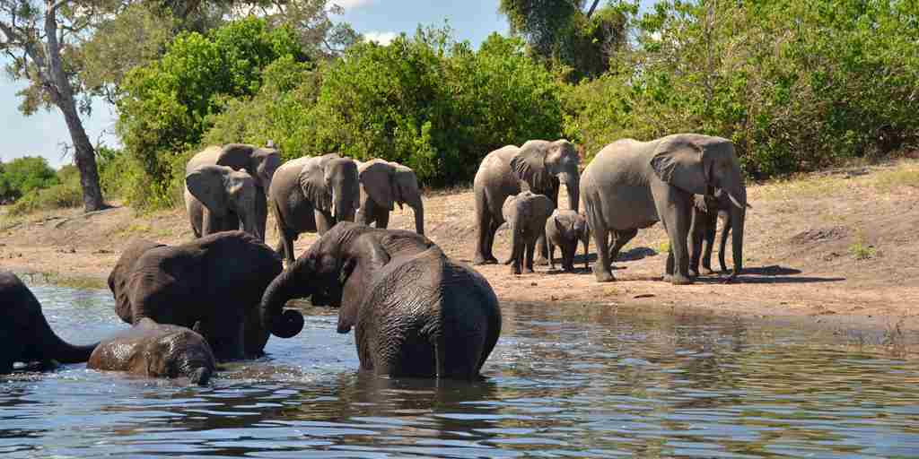 Muchenje-Safari-Lodge-elephants.jpg