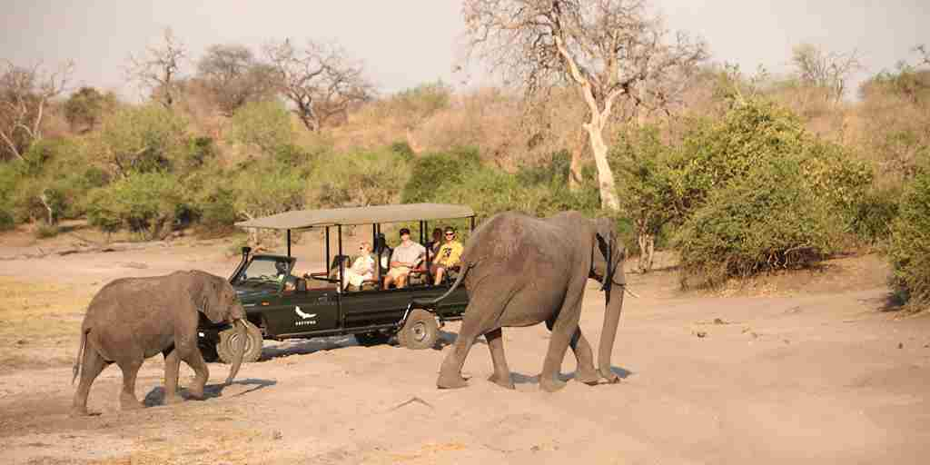 &Beyond-Chobe-Under-Canvas-game-drive-2.jpg