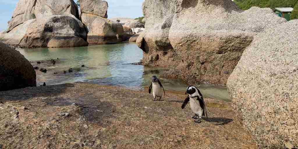 Boulders-beach-penguins-Cape-Town.jpg