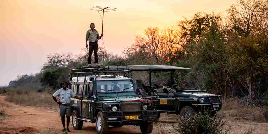 Sapi Springs Camp game drive