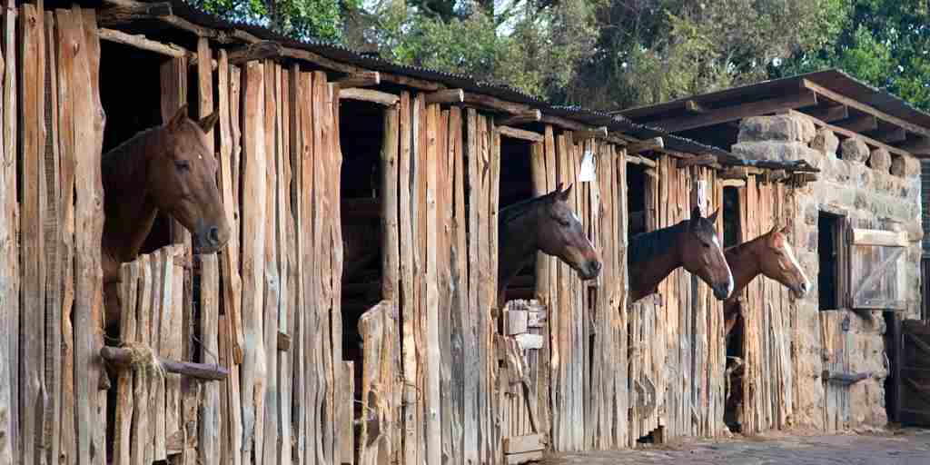 Offbeat Safaris   Deloraine Stables