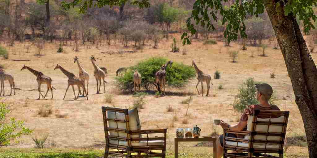 wildlife-views-stanley-and-livingstone-hotel-zimbabwe-yellow-zebra-safaris.jpg