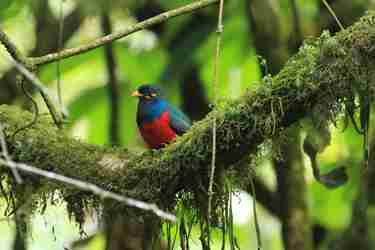 bar-tailed-trogon-birding-yellow-zebra-safaris.jpg