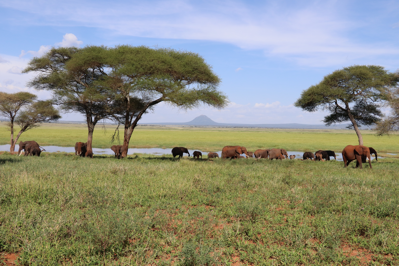 9b50245cf7ba Tarangire National Park Safaris | Tanzania | Yellow Zebra Safaris