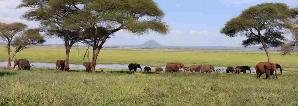 tarangire-green-season-tanzani-yellow-zebra-safaris.JPG