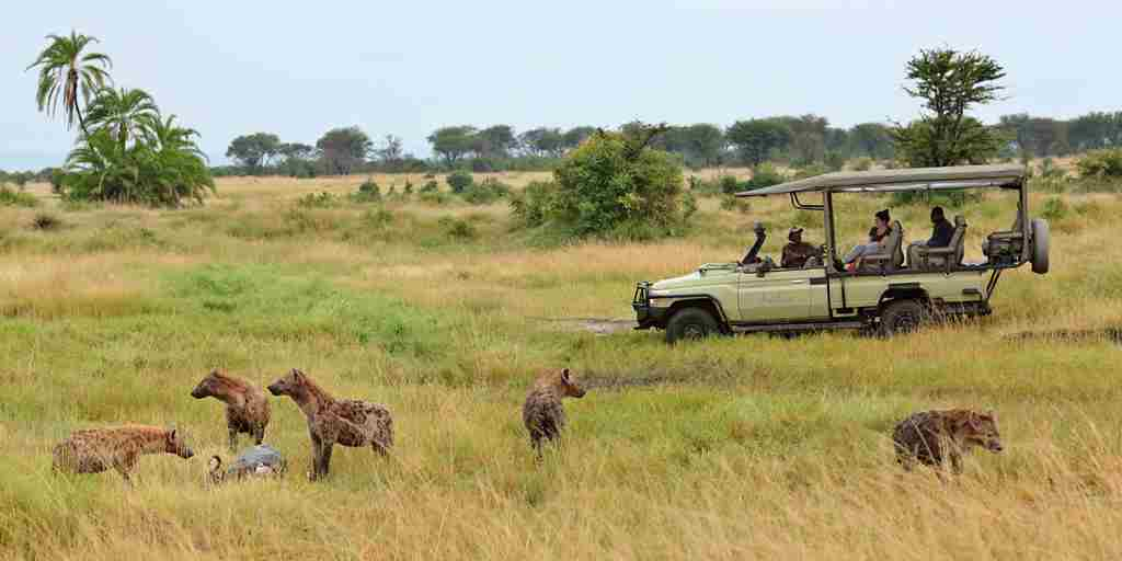 Sayari - Game drive with Hyena viewing.jpg