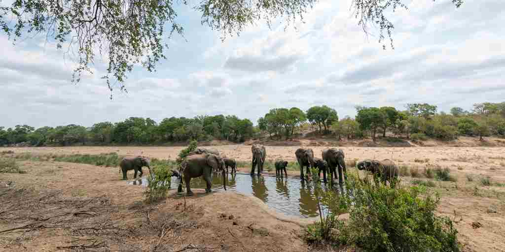 Elephants-by-Waterhole-South-Africa.jpg