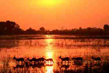 botswana-photographic-safaris-africa-yellow-zebra-safaris.jpg