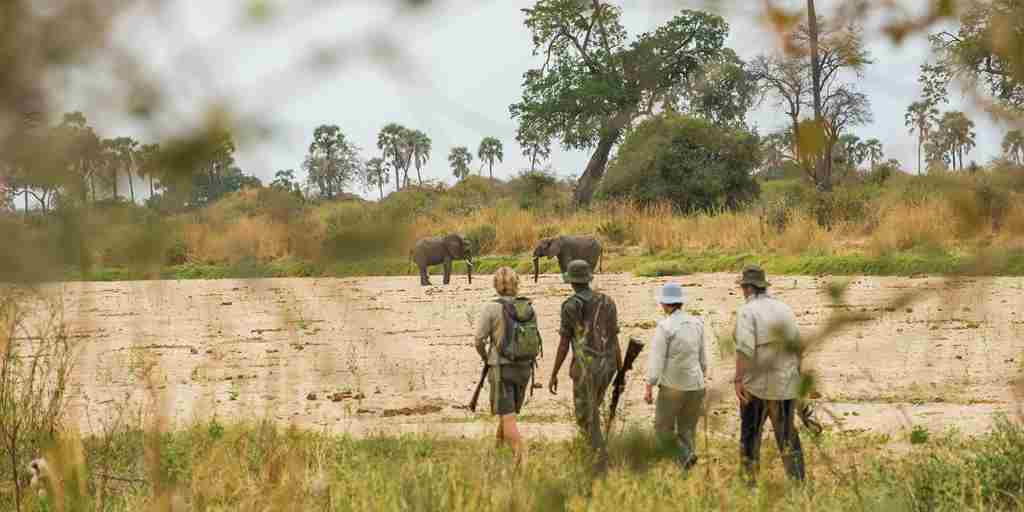 kwihala-camp-asilia-Elephants-Through-Bushes-Walking-Safari-Ruaha-National-Park.jpg