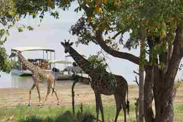 giraffe-selous-tanzania-client-review-yellow-zebra-safaris.jpg