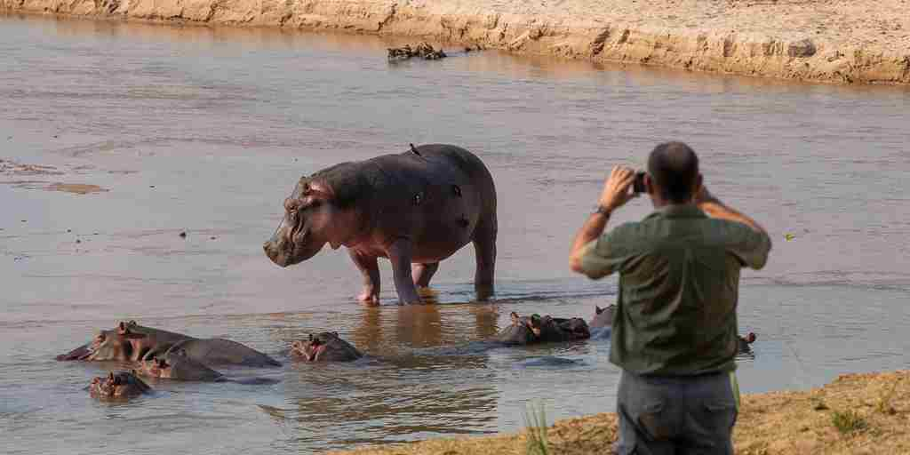 hippo-pool-takwela-camp-zambia-yellow-zebra-safaris.jpg