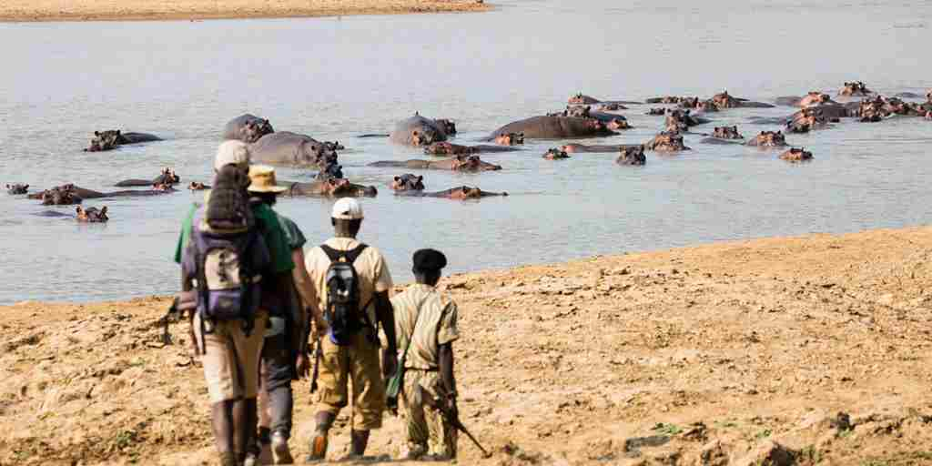 walking-by-the-luangwa-river-hippos-takwela-camp-zambia-yellow-zebra-safaris.jpg