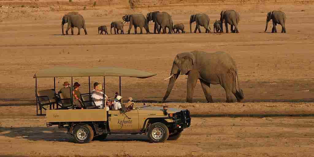 elephant-wildlife-game-drive-kafunta-river-lodge-zambia-yellow-zebra-safaris.jpg