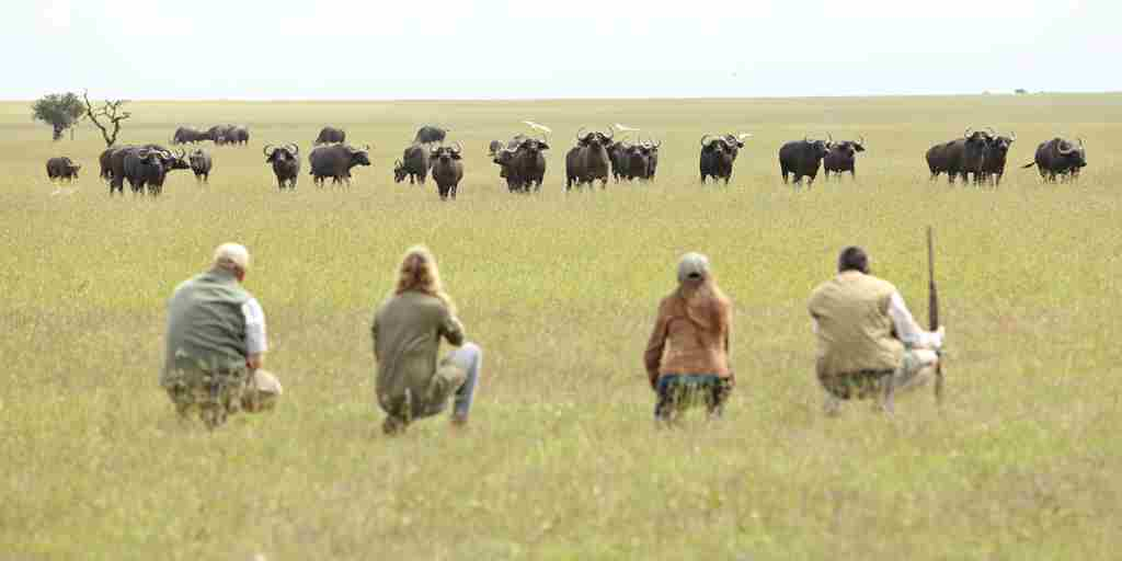 walking-safari-ol-pejeta-bush-camp-kenya-yellow-zebra-safaris.jpg