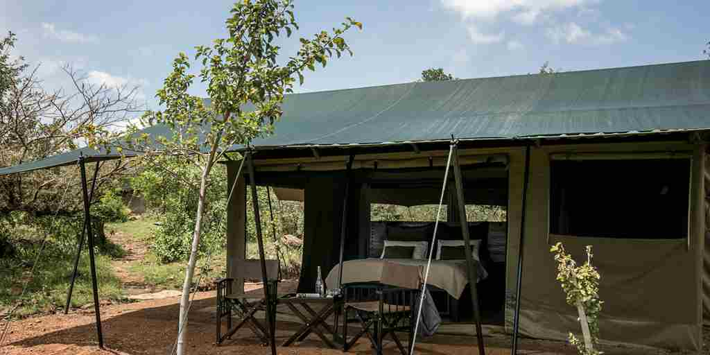 basecamp wilderness kenya yellow zebra safaris