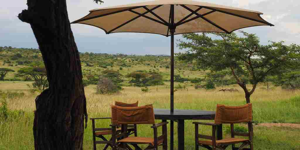 garden basecamp wilderness kenya yellow zebra safaris