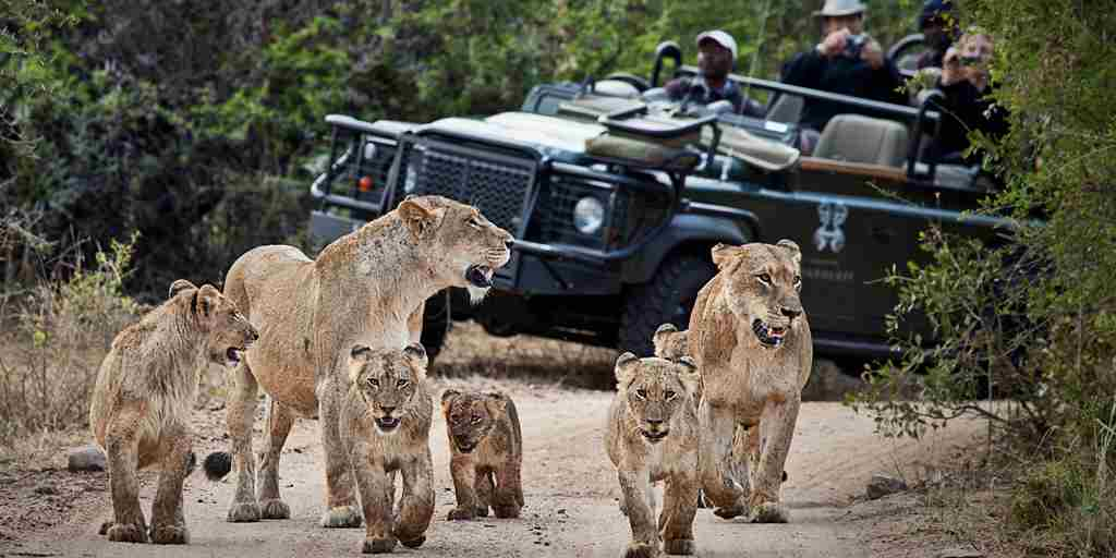 londolozi-founders-camp-game-drive-yellow-zebra-safaris.jpg