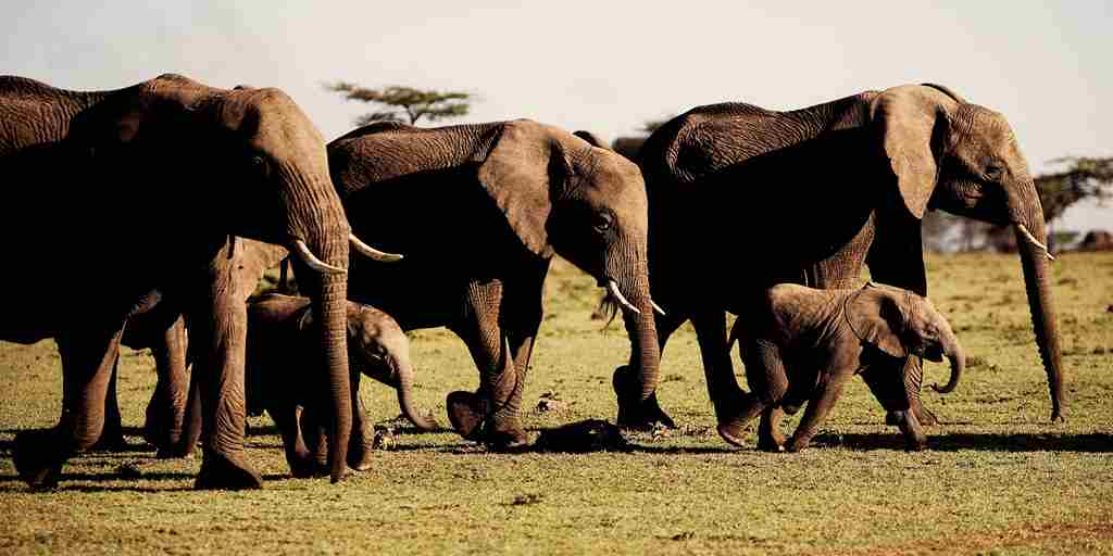 elephants-karen-blixen-camp-kenya-yellow-zebra-safaris.jpg