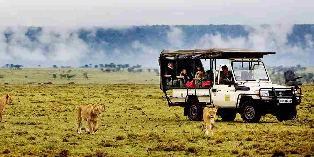 game-drive-lions-karen-blixen-camp-kenya-yellow-zebra-safaris.jpg