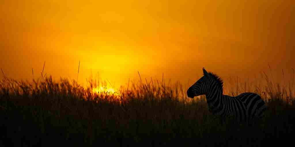 sunrise-tanda-tula-rishile-camp-south-africa-yellow-zebra-safaris.jpg