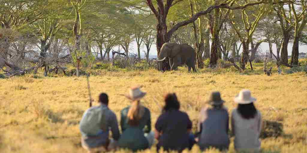 elephant walking namiri plains tanzania yellow zebra safaris