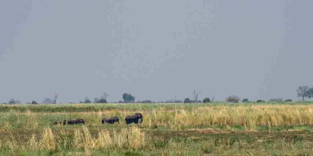 camp-linyanti-elephants-botswana-yellow-zebra-safaris.jpg