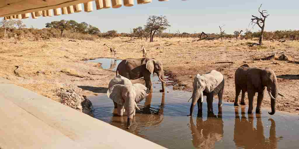 belmond savute elephant lodge wildlife botswana elephants yellow zebra safaris