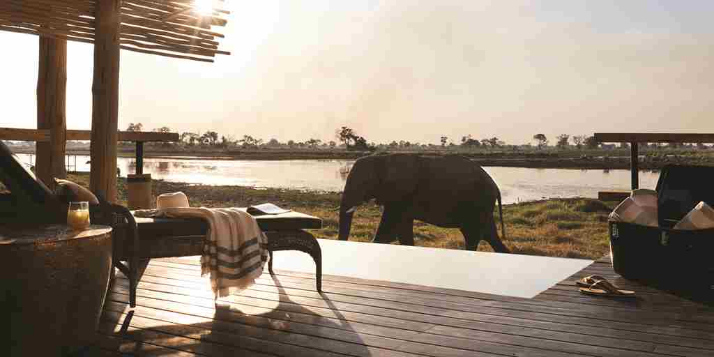 belmond eagle island lodge elephant yellow zebra safaris