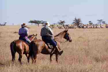 horses-plain-sosian-kenya-romantic-safari-blog-yellow-zebra-safaris.JPG