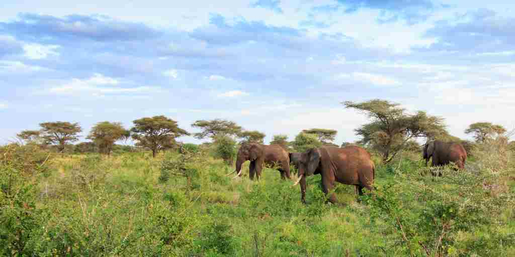 meru-wilderness-camp-kenya-elephants-yellow-zebra-safaris.jpg