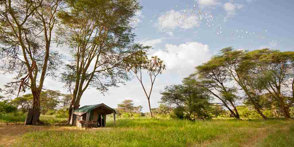 meru-wilderness-camp-kenya-tent-view-yellow-zebra-safaris.jpg
