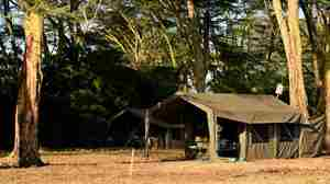 meru-wilderness-camp-kenya-tent-yellow-zebra-safaris.jpg