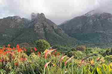 5Kirstenbosch-south-africa-client-review-yellow-zebra-safaris.jpg