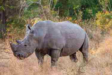 8WhiteRhino-south-africa-client-review-yellow-zebra-safaris.jpg